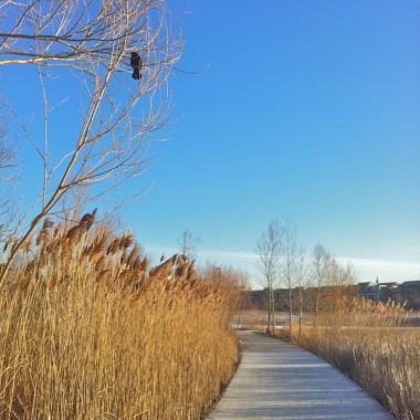 Walk in Woodbine Park