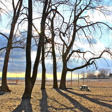 Toronto Beach Tree Shadows
